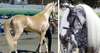 9 chevaux parmi les plus particuliers du monde: vous allez les adorer!