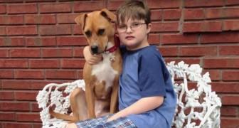 Um pitbull é adotado pela família de uma criança autista: o efeito é surpreendente