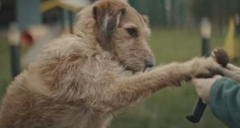 A dog waits for a special two-legged friend -- his story is very tender and moving!