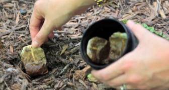Discover ten tea bag hacks!