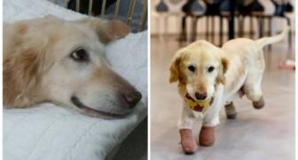 Ce chien a vécu une vie d'horreurs: le voici pendant qu'il joue pour la première fois