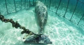Alcuni sub trovano due animali intrappolati dentro gabbie subacquee: immaginereste il motivo?