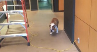 Er hat Angst, das Kabel zu überqueren, aber die Lösung ist genial