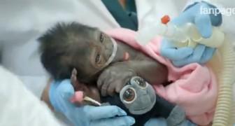 Nasce dopo un cesareo d'emergenza: ciò che fa con il peluche commuove i medici