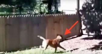 A man builds a fence for his dog --- but look what happens next!