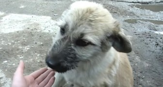 Un homme trouve un chien abandonné: regardez ce qu'il fait quand on l'approche...