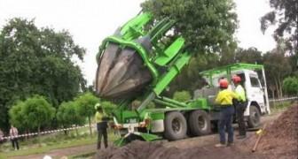 Como tranplantar un árbol en Australia