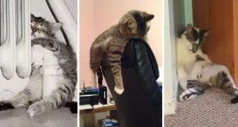 Queste foto dimostrano chenon esiste luogo in cui un gatto non possa addormentarsi