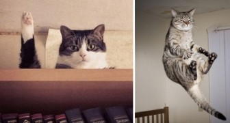 18 photos de chats prises au bon moment!