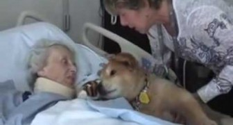Este cão tem 19 anos, veja o que faz quando encontra esta mulher!