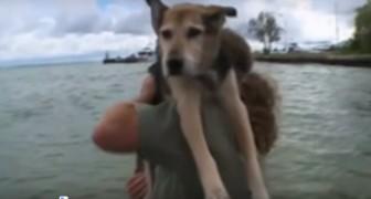 Este cão sofre de uma grave artrite: o que o seu dono faz por ele é comovente