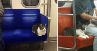 Ce chat prend régulièrement le métro TOUT SEUL. Vous ne le croyez pas ? Regardez ici !