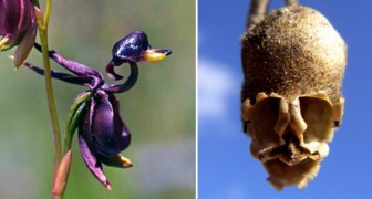 Les infinies beautés de la nature: 18 fleurs qui ressemblent à tout sauf à une fleur!