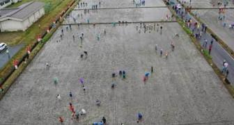 Piantano del riso in questi campi enormi: 4 mesi dopo accorrono migliaia di turisti