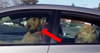 Iemand heeft zijn honden achtergelaten in de auto, let goed op wat er dan gebeurt... Wow!