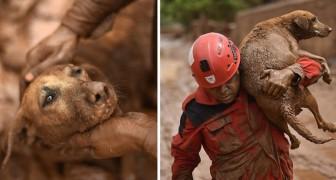 Il paese è stato distrutto dal fango: il gesto di un vigile del fuoco ha commosso il mondo intero