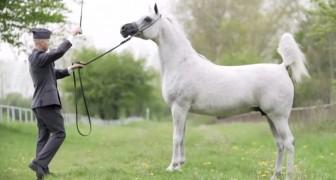 Un hombre y su caballo se miran a los ojos: las imagenes que siguen son un encanto