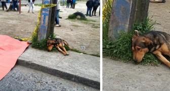 Un chien refuse de quitter le corps de son ami humain tué par une voiture