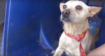 They save a dog from a garbage can ---- but they also discover another nice surprise!