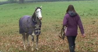 Torna a casa dopo 3 settimane: quando il cavallo la rivede, la reazione è commovente