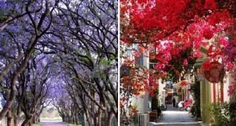 16 viali sparsi per il mondo che la primavera ha trasformato in un'esplosione di colore