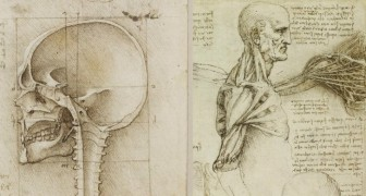 Pubblicati gli studi anatomici di Leonardo: incredibili disegni di oltre 400 anni fa