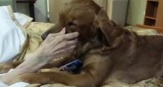Un perro consuela a una mujer en sus ultimas horas...Lo que hace es increiblemente conmovedor