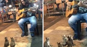 Er spielt einen Song auf seiner Gitarre, aber schaut mal, wer ihm zuhört