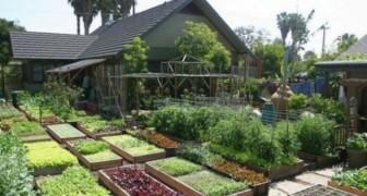 10 anni fa hanno creato un piccolo orto: oggi producono 2 tonnellate di cibo in soli 400 mq di spazio