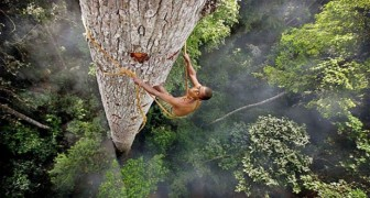 A man climbs a 40-meter tree! --- The reason is exciting and . . . scary!