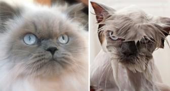 Dieren die in bad moeten: de voor en na foto's zijn... 'monsterlijk' hilarisch!