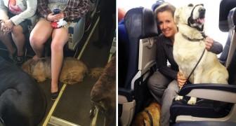 Questa compagnia ha permesso ai cani di entrare in aereo con i loro padroni per un motivo lodevole