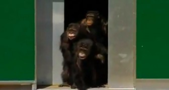They spent 30 years in a cage -- Now they can look at the sky for the first time!