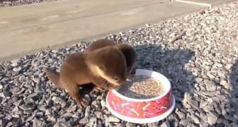Er findet zwei kleine hungrige Otter: Sobald er die Schachtel auf den Boden stellt, solltet ihr genau hinhören. Wow!