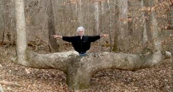 Nel Nordamerica si trovano decine di alberi ricurvi: ecco chi li ha creati e soprattutto perché