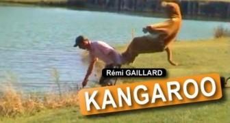El Canguro es Rèmi Gaillard