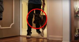 Regala un cane alla moglie con l'Alzheimer: il loro primo incontro gli fa sciogliere il cuore