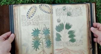 Linguaggio indecifrabile e piante sconosciute: un manoscritto medievale ancora avvolto nel mistero