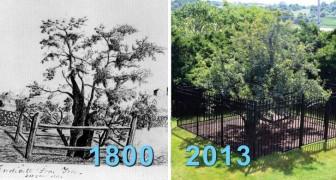 Il a survécu à 400 hivers froids: voici pour vous l'arbre à fruit le plus vieux d'Amérique