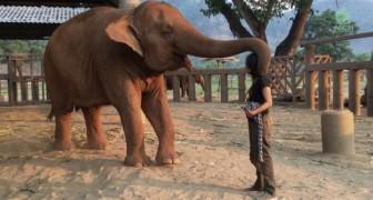 Elle s'approche de l'éléphant et commence à chanter: voici comment l'animal réagit ... Wow!