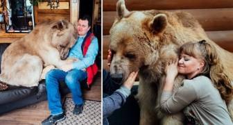 Una coppia adotta un cucciolo di orso: ecco come vive 23 anni dopo