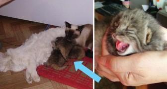 Un contadino trova 4 gattini orfani, ma poco dopo si accorge che non sono come gli altri