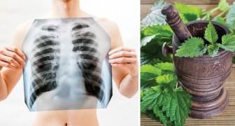 Stop alle tossine: ecco come disintossicare e pulire i polmoni dalla nicotina
