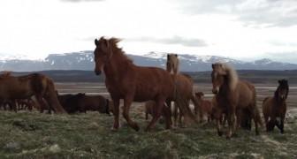 Un hombre observa los caballos salvajes, pero cuando gira la telecamara a la derecha...Wow!!!