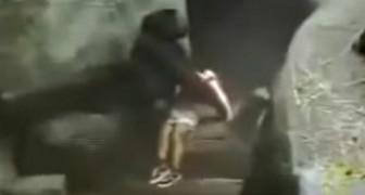 En 1996, un enfant tombe dans l'enceinte d'un zoo: la réaction du gorille a laissé tout le monde stupéfait