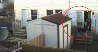 A neighbor's dog is filmed for six weeks --- what is revealed is heartbreaking!