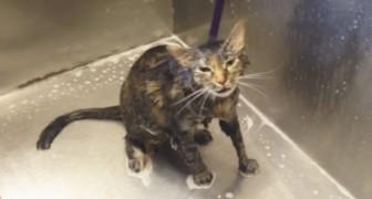 Una donna sta lavando il suo gatto, ma lui dice qualcosa che la lascia di stucco!