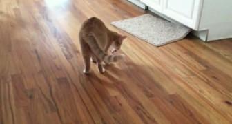 Het lijkt op een normale spelende kat, maar als hij opkijkt zul je versteld staan!