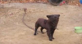 Varje dag så besökte hon den här fastkedjade hunden: titta vad som händer efter 9 år!