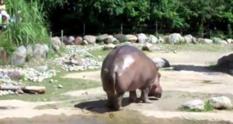 Guarda l'ippopotamo mamma! Ooops!